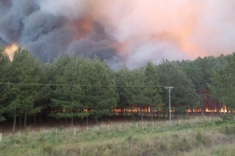 Están prohibidas todo tipo de quemas en el territorio provincial