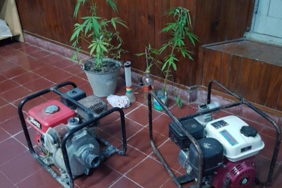 Allanamiento: Recuperaron elementos sustraídos e incautaron plantas de marihuana