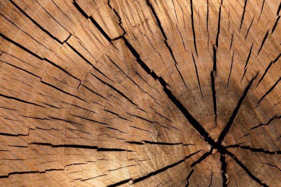 Presente y futuro de la industria maderera nacional