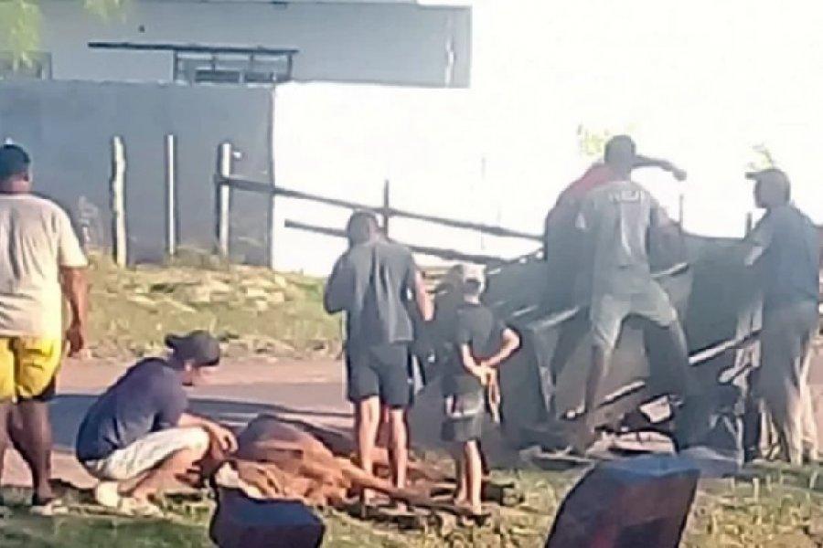 Un caballo que tiraba un carro murió en plena vía pública