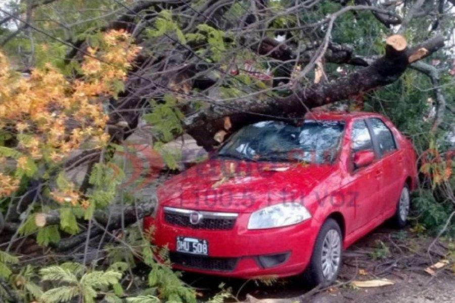 Varios árboles caídos tras las fuertes tormentas