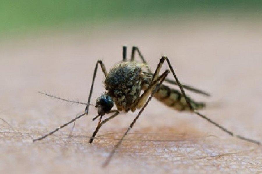 Alerta por invasión de mosquitos voraces