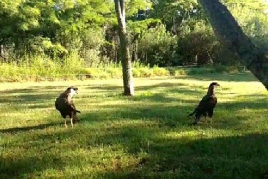 Animales autóctonos rescatados, regresaron a su entorno natural