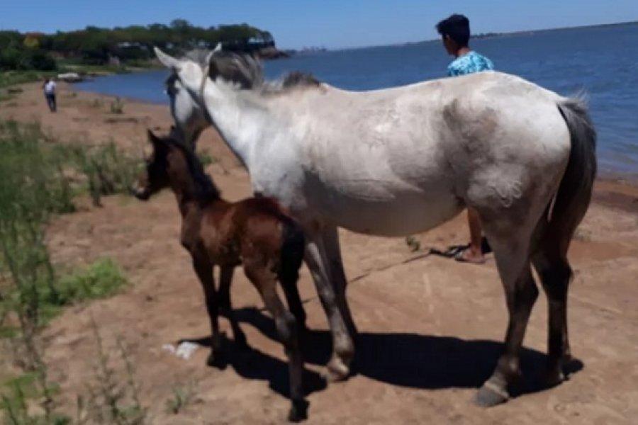 Recuperaron tres caballos que habían sido denunciados como robados