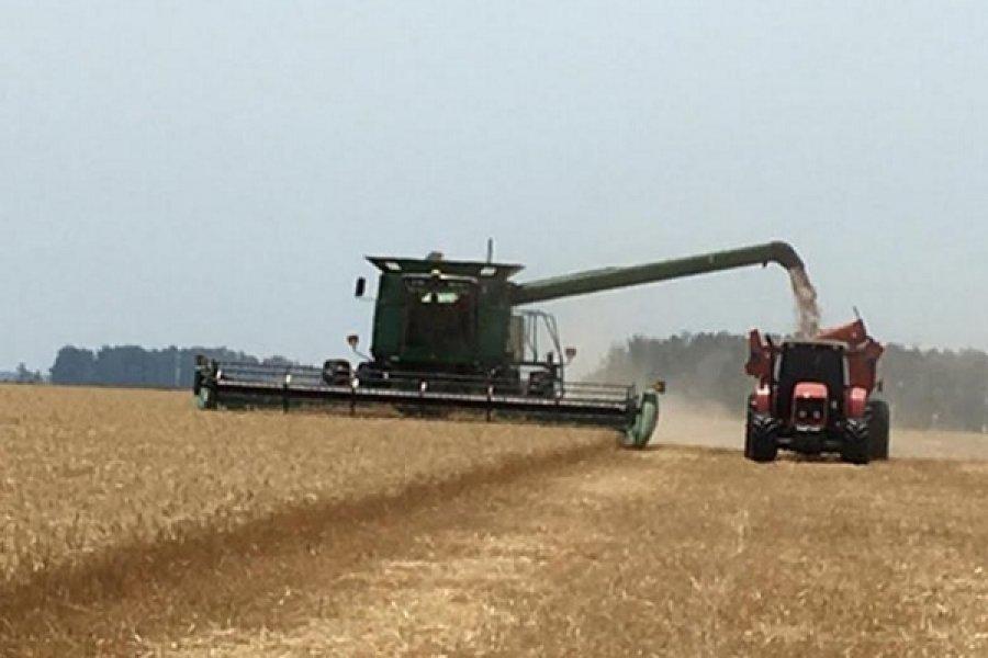 Corrientes exportó trigo a Brasil, corolario de la primera misión comercial a ese país
