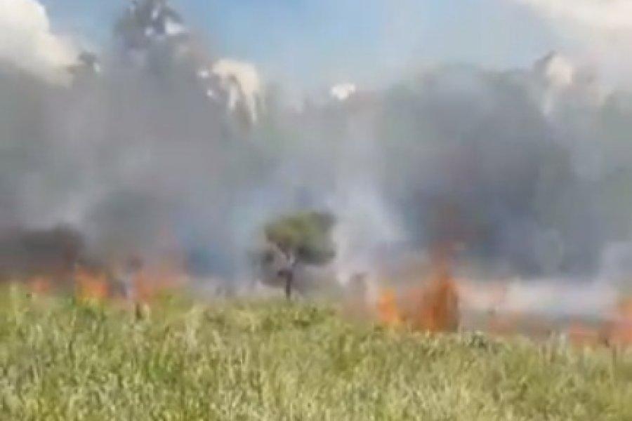 Incendio en San Carlos pone en riego postes de energía eléctrica
