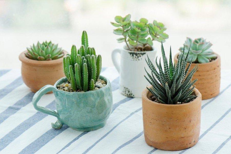 Plantas que te roban la energía y que no deberían estar en tu casa