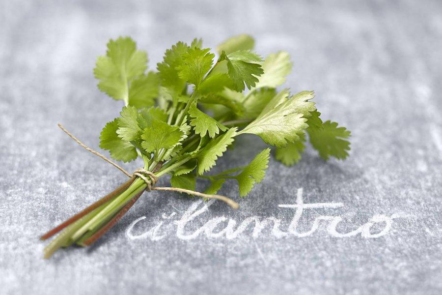 7 plantas aromáticas muy digestivas para tus recetas