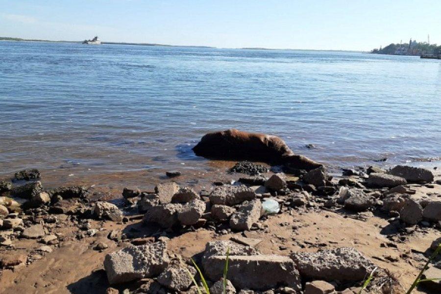 Misteriosa aparición de un caballo muerto en punta San Sebastián