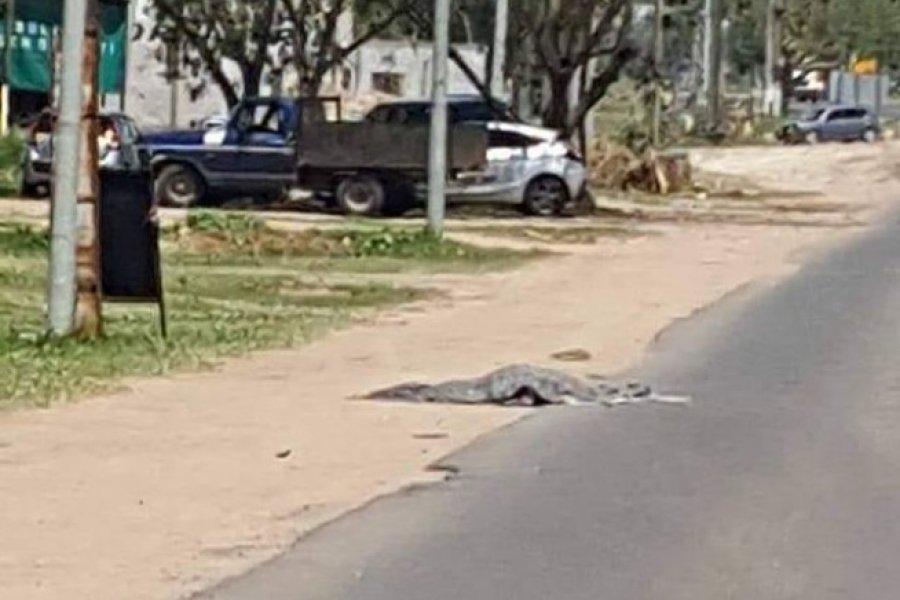 Un peatón murió atropellado en Ruta 5