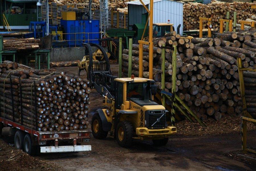 Balance 2020: APEFIC destaca logros en materia foresto industrial