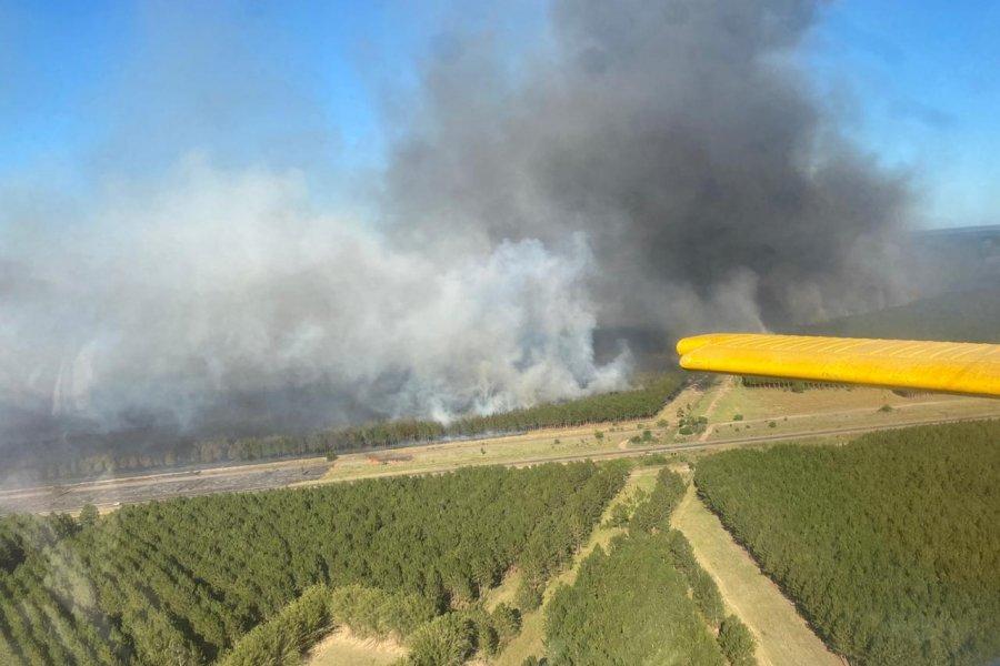 Gigantesco incendio forestal se entiende entre Ituzaingó y Virasoro