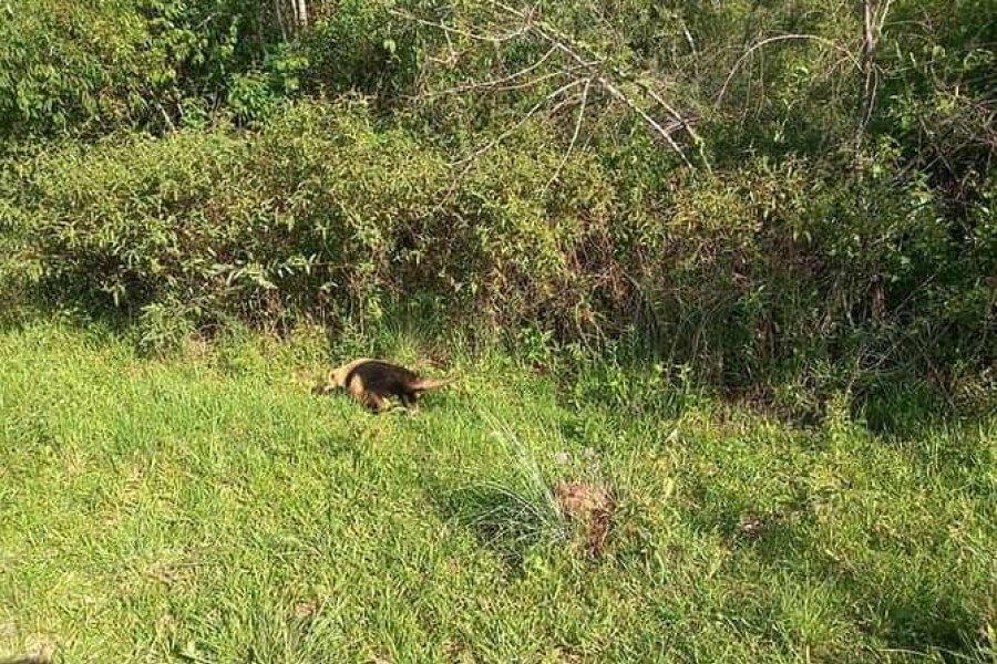 La Reserva natural de Santo Tomé tiene un nuevo integrante