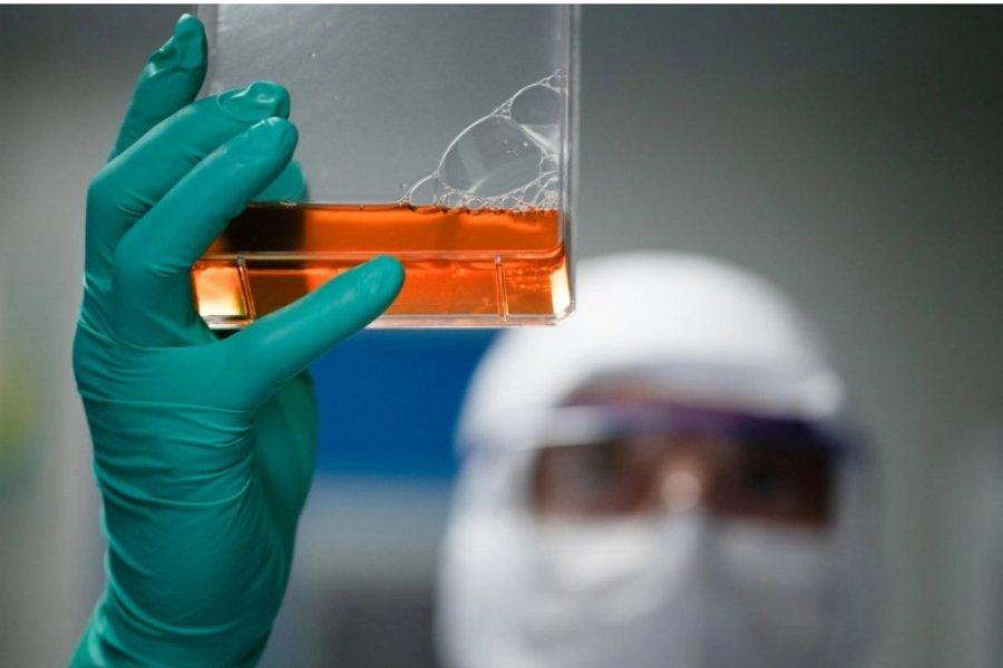 Coronavirus: el suero equino estará disponible la semana que viene