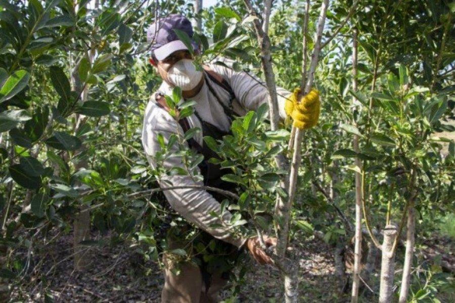 La Nación envía subsidios para casi 600 tareferos correntinos