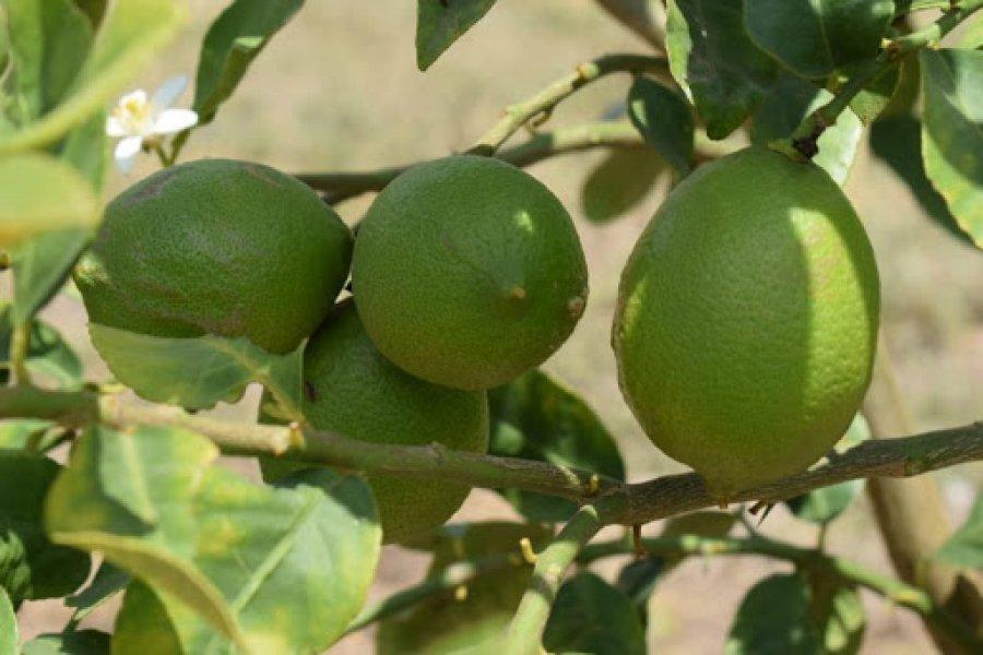Evalúan el desarrollo del Plan Limón en San Cosme y Ramada Paso