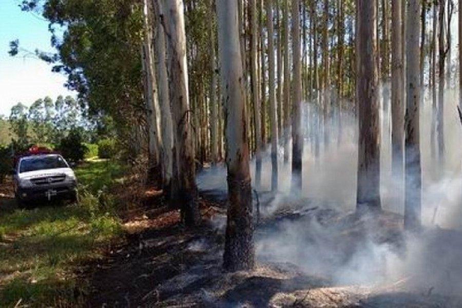Un  incendio consumió parte de una forestación
