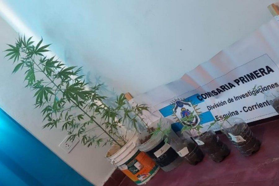 Esquina: Hallaron plantines