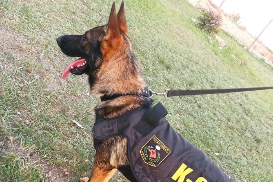 La Policía de Corrientes incorporó un can donado por Santa Fe