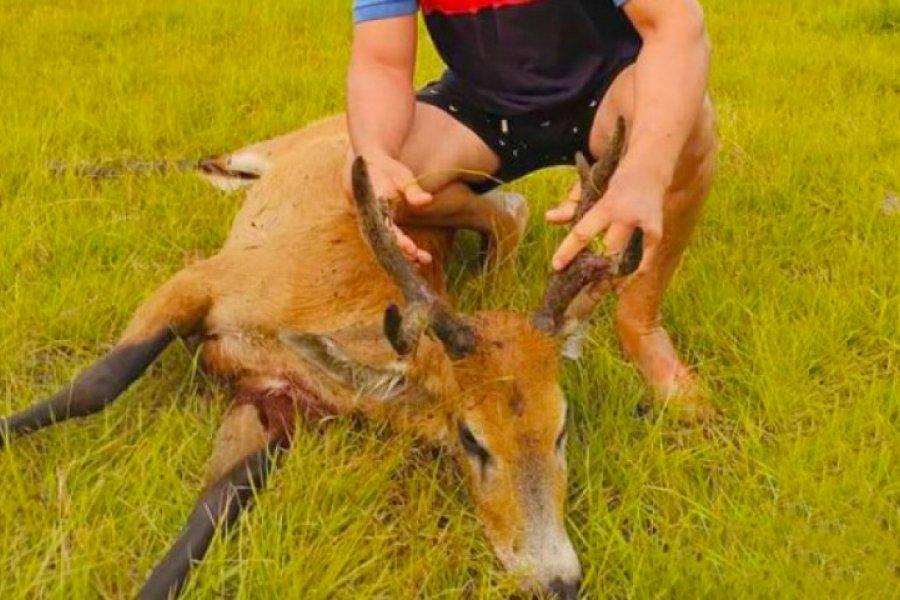 Corrientes: Mató a un ciervo y orgulloso lo subió a sus redes