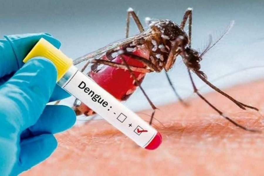 Invasión de mosquitos en Corrientes sin información sobre dengue