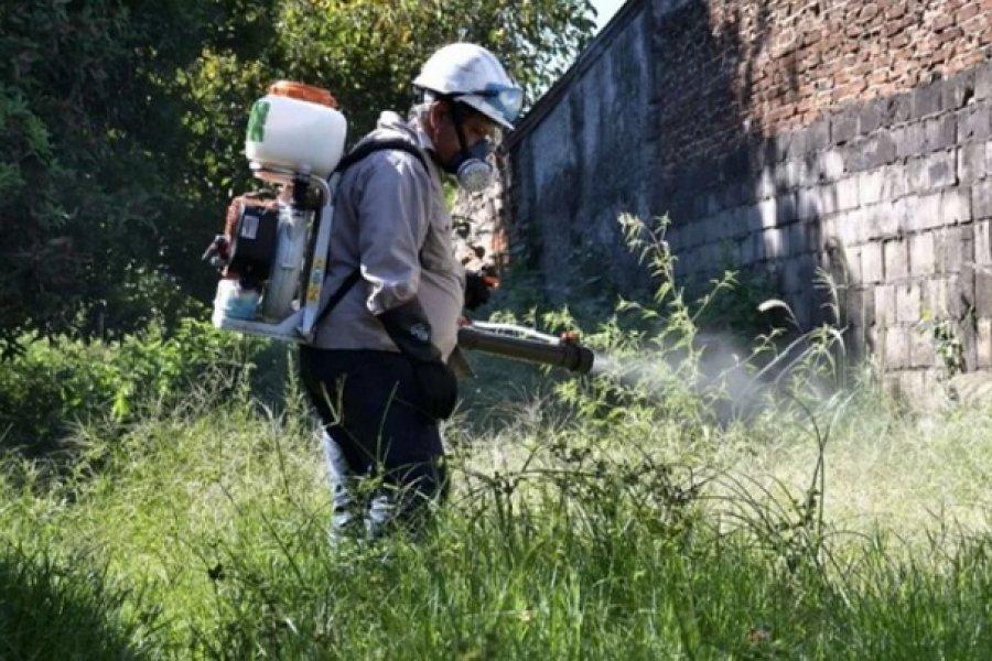 Vecinos reclaman acciones municipal ante la eclosión masiva de mosquitos