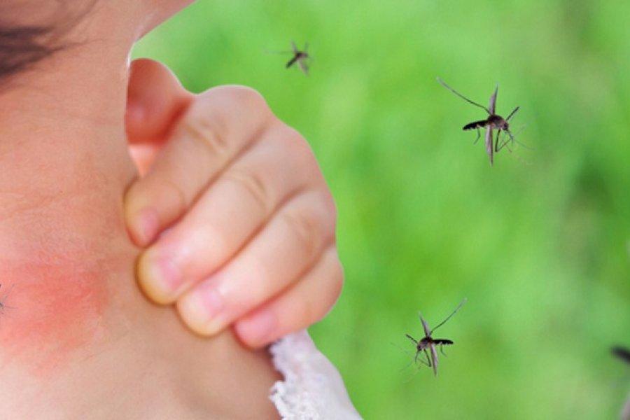 Recomendaciones para evitar y combatir al Dengue