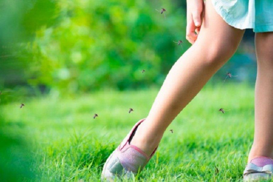 Por qué los mosquitos pican a algunas personas más que a otras ?