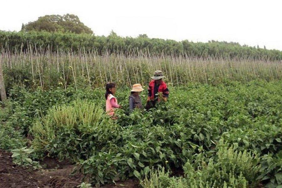 Trabajo infantil: la OIT advierte que puede aumentar por la pandemia