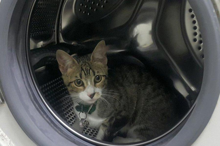Seis meses de prisión por matar a su gato metiéndolo en el lavarropas