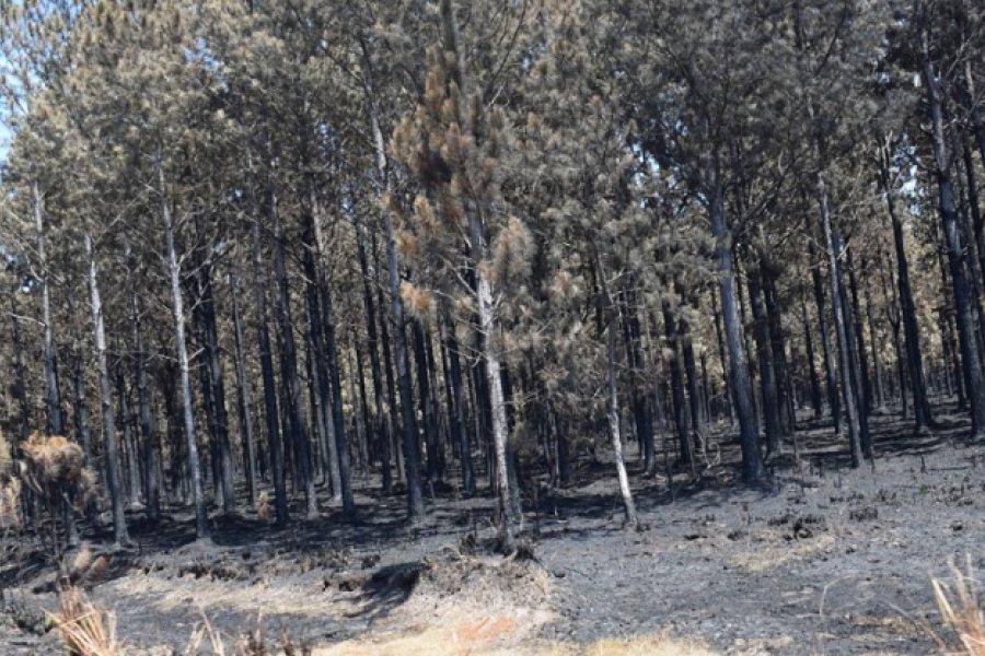 Emergencia forestal: Se inicia en terreno la recepción de las Declaraciones Juradas