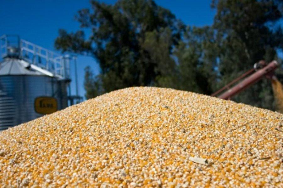 Las lluvias de febrero impulsan la recaudación por exportaciones de maíz