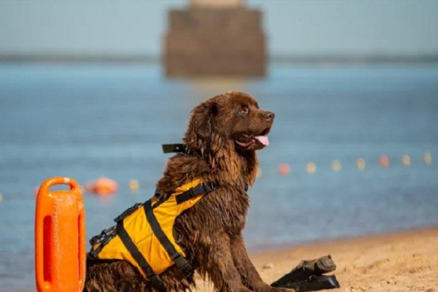 El perro Sam rescató a un nadador en Corrientes