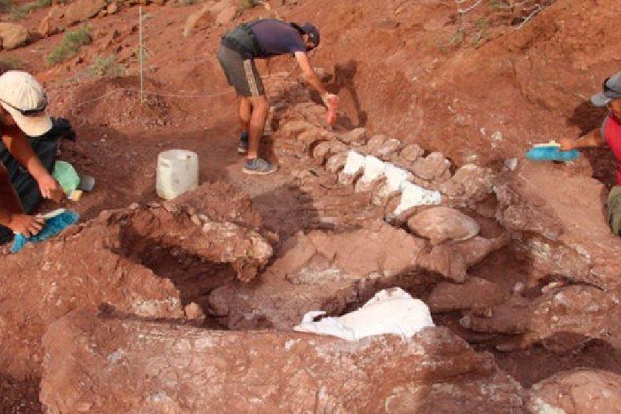 Científicos argentinos hallaron el titanosaurio más antiguo a nivel mundial