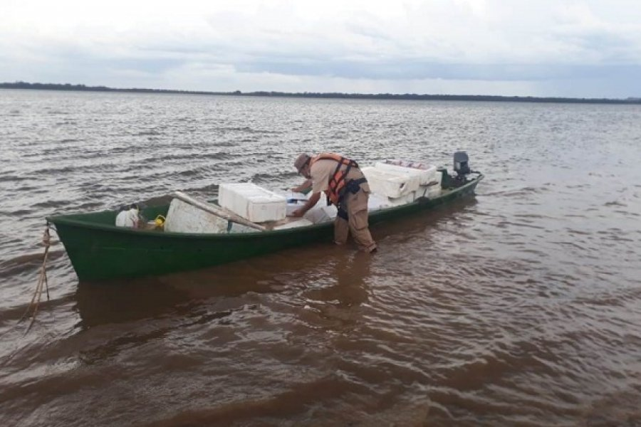 Decomisaron tonelada de pescado con ingreso furtivo desde Brasil