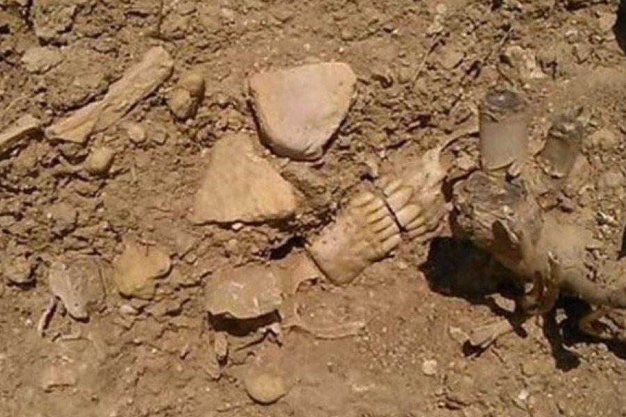 Limpiaban una estancia y encontraron restos humanos