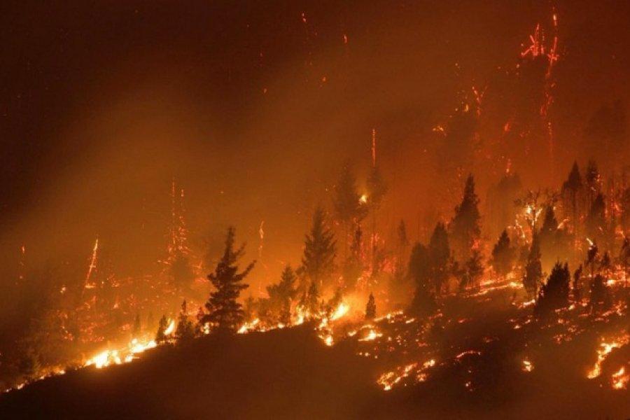 Incendio en El Hoyo: La lluvia trae alivio, pero lo que pasó ayer fue dantesco