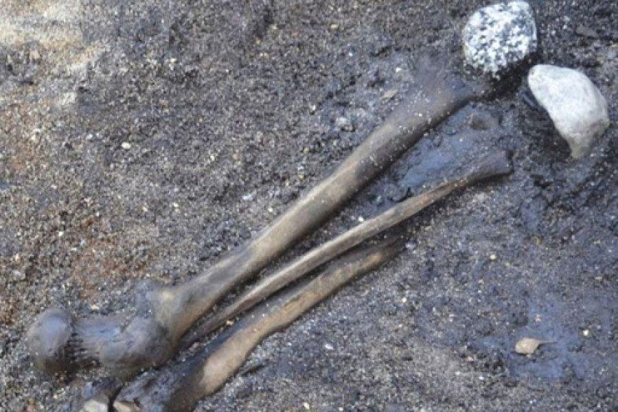 Ruta 43: Hallaron restos óseos en un campo de Corrientes