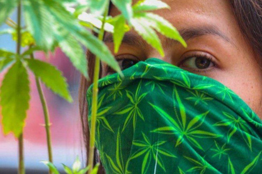 México cada vez más cerca de legalizar la marihuana recreativa