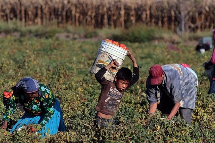 Rescataron a más de 100 trabajadores rurales en condiciones infrahumanas
