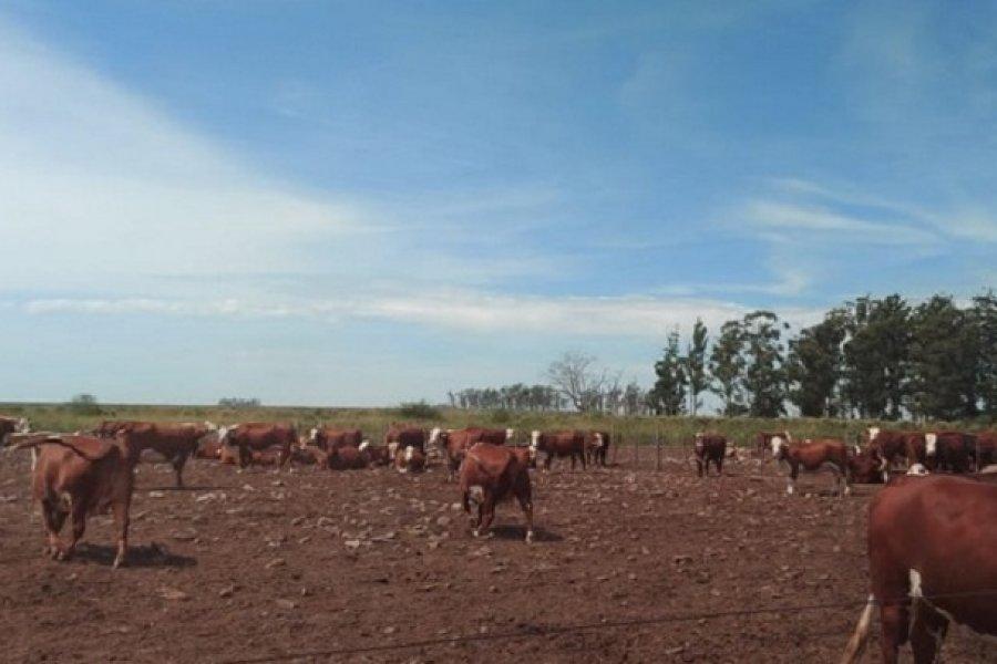 Con implantación de tecnología, empresas radicadas en Corrientes buscan ampliar la zona agrícola