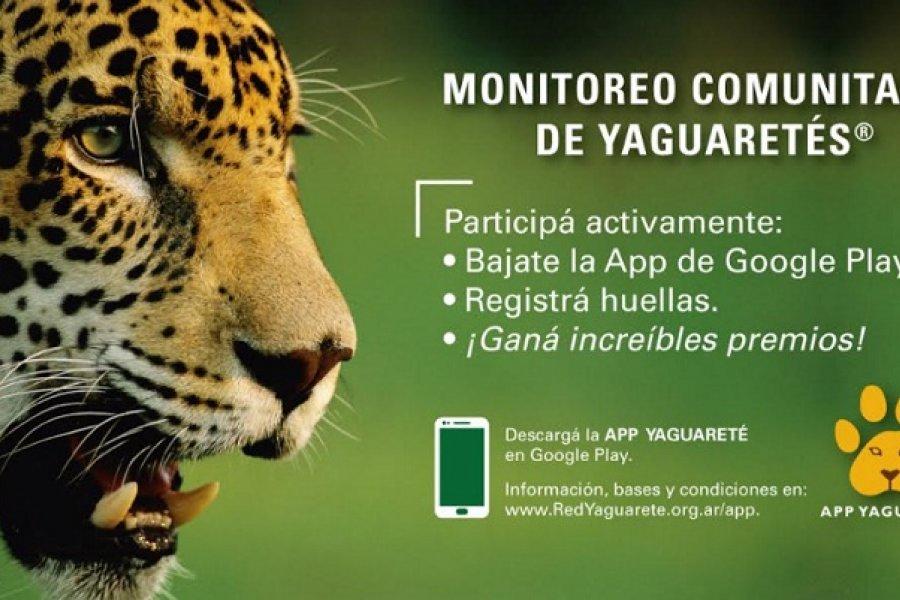 Lanza una APP de celulares para monitorear yaguaretés