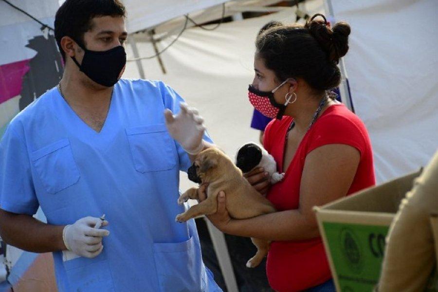 La próxima semana habrá dos operativos de Mascotas Saludables