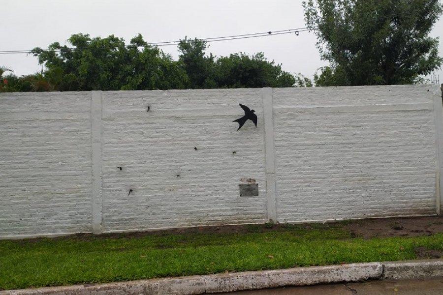 Ataque vandálico: hicieron desaparecer monumento por la Memoria