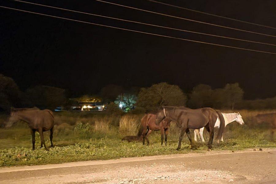 Denuncian presencia de caballos sueltos en el acceso a Paso de la Patria