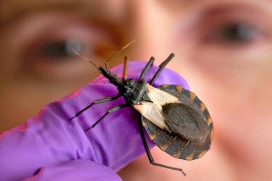 14 de abril: Día de la Enfermedad de Chagas