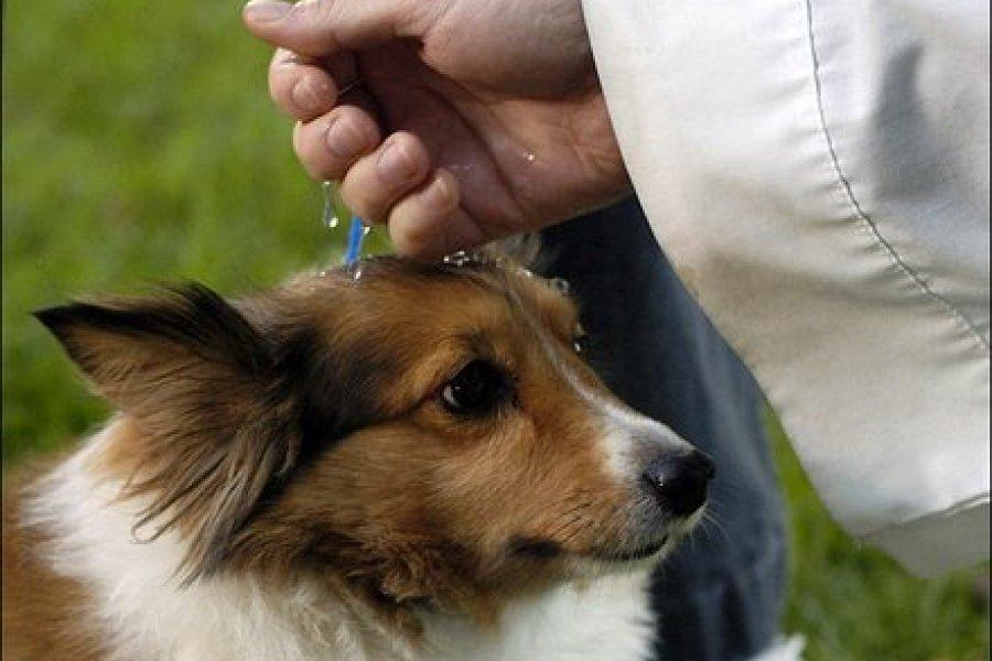 Bendecirán a las mascotas en el Día del Animal en la iglesia Cruz de los Milagros