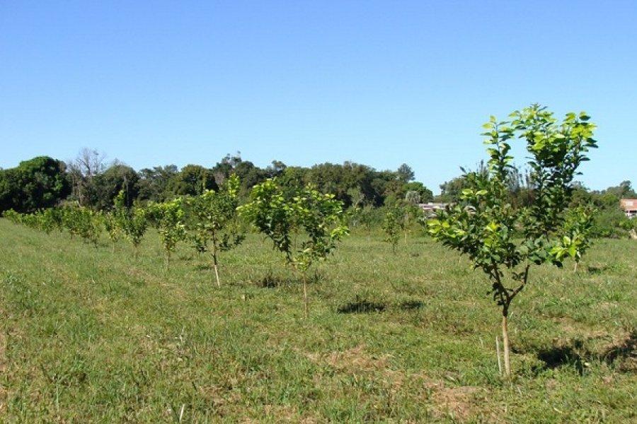 Plan Limón: En articulación con el INTA, en Caimán y Caá Catí comenzaron las capacitaciones a productores