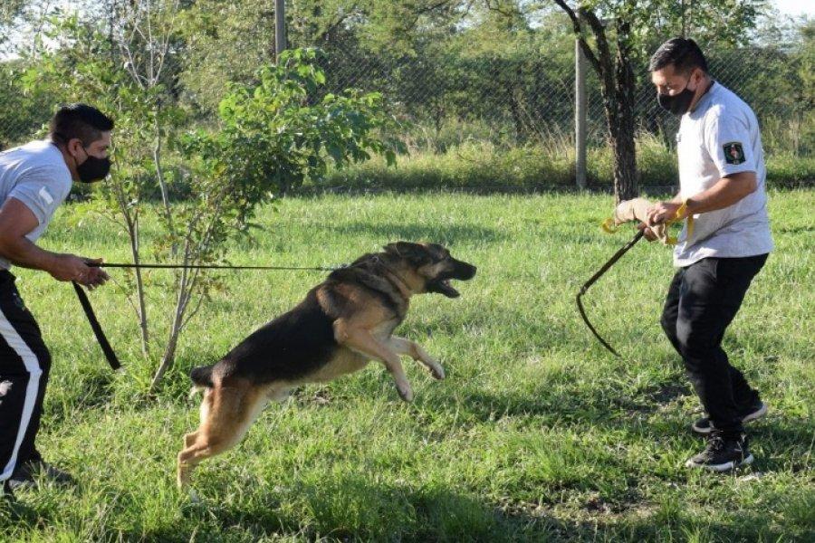 K-9: Así es el grupo especial de perros de la Policía de Corrientes