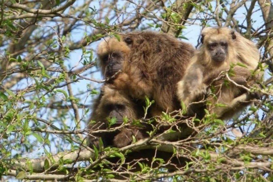 """Campaña para declarar """"Monumento Natural"""" a una especie en riesgo"""